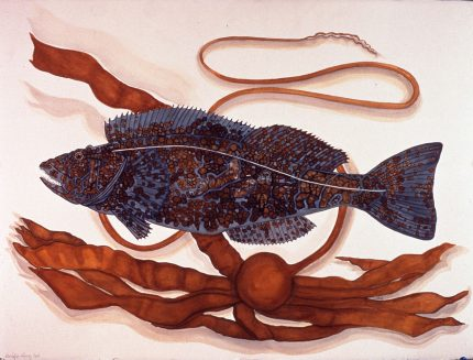 Pacific Ling Cod