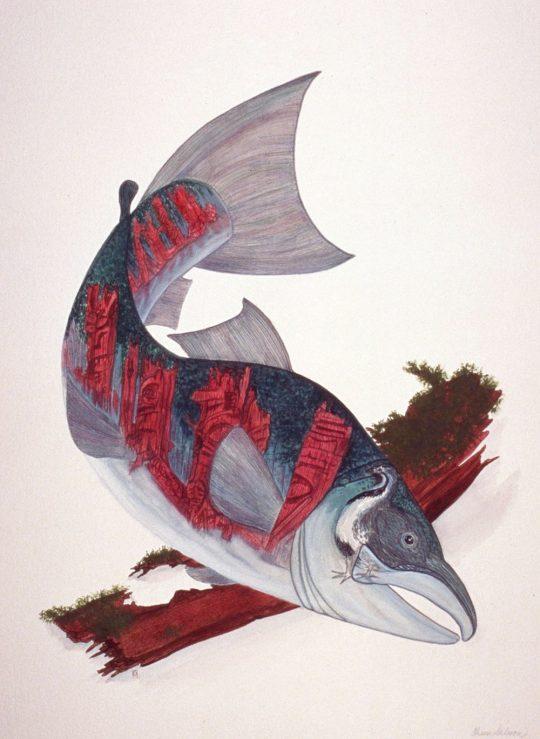 Chum Salmon