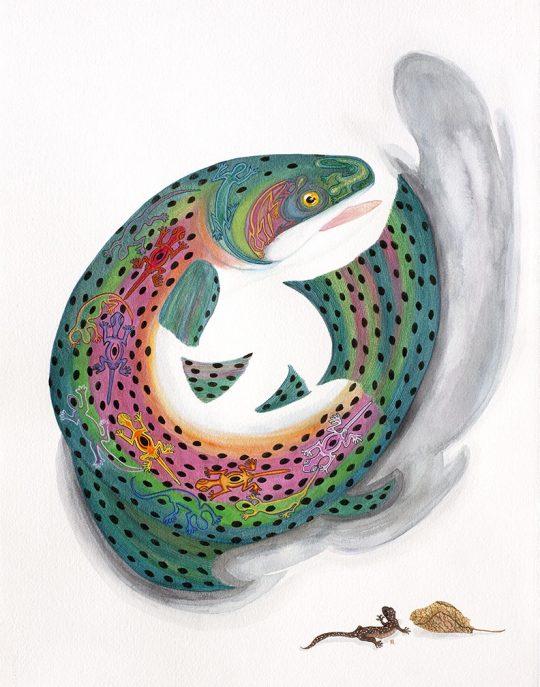 Salamander Rainbow Trout