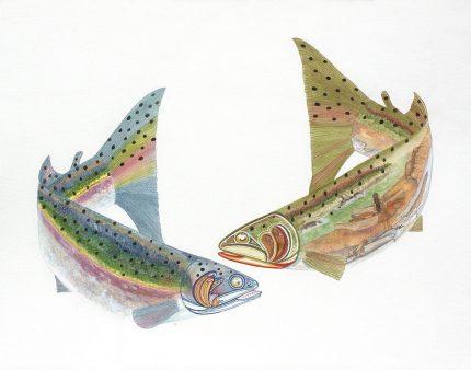rainbow steelhead